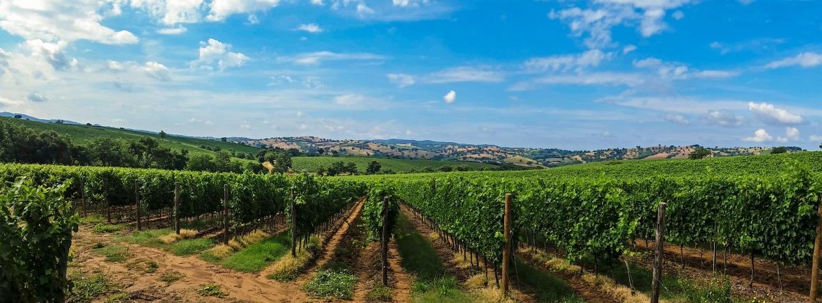 fond pour le formulaire de contact Egretier - matériel viticole