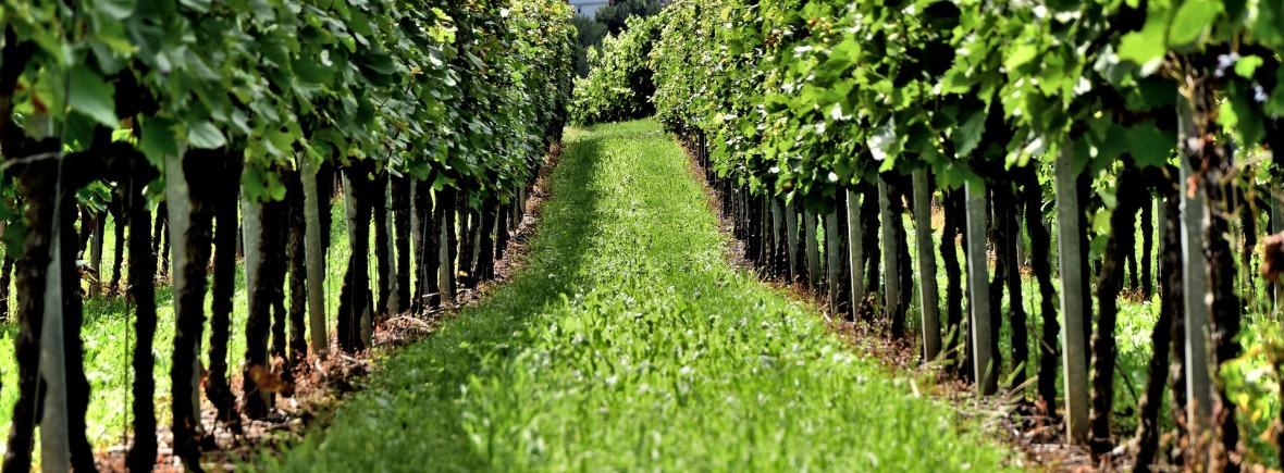 Gamme viticole Egretier