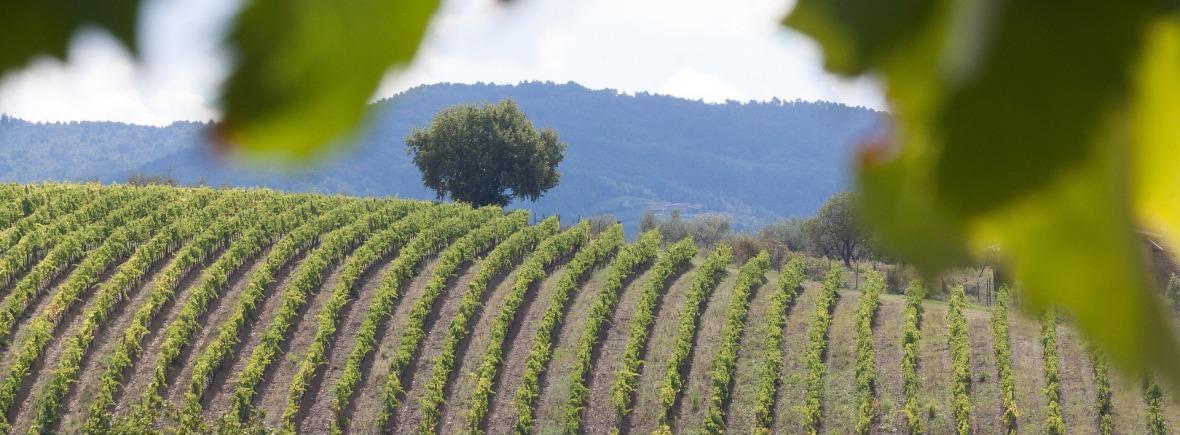 Fond de page pour prix et récompenses de la société Egretier viticole et vinicole