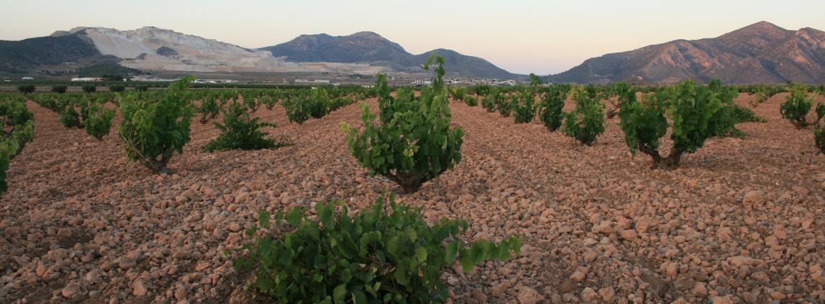 Visuel de fond pour SARL Jean Michel Egretier, service viticole