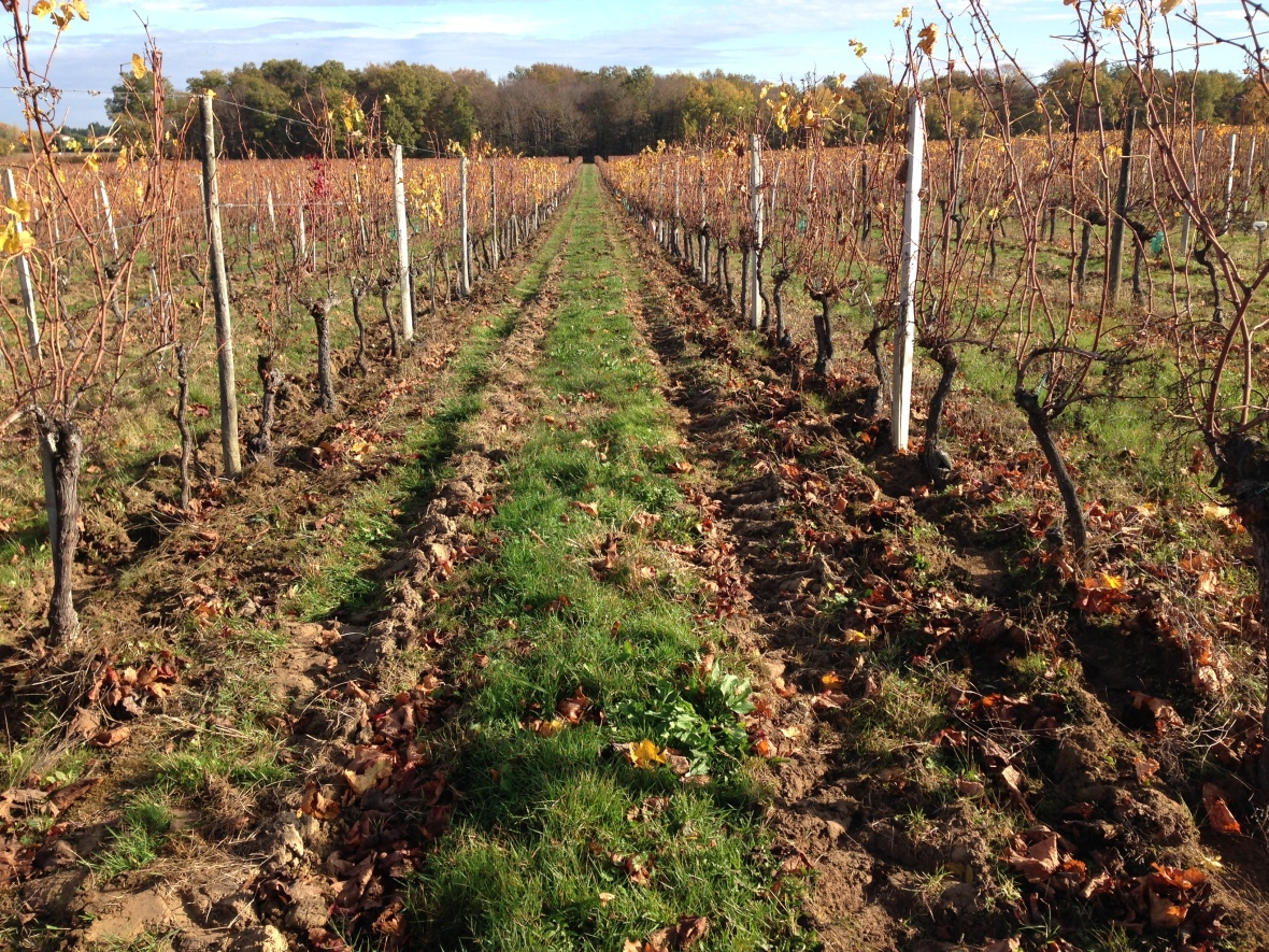 Résultat du travail de la mini sillon dans les vignes du Château Landreau. Photographie d'Olivier Tordable pour egretier viticole