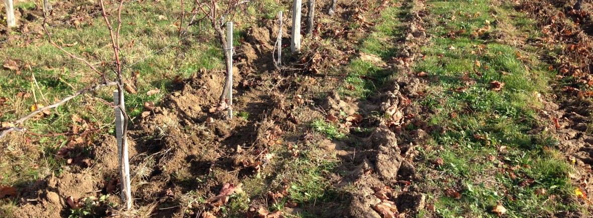 Résultat du travail de la mini sillon dans les vignes du Château Landreau.