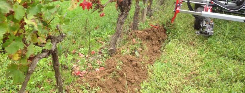 Travail du sol avec Sarcleuse à Chausser EGRETIER