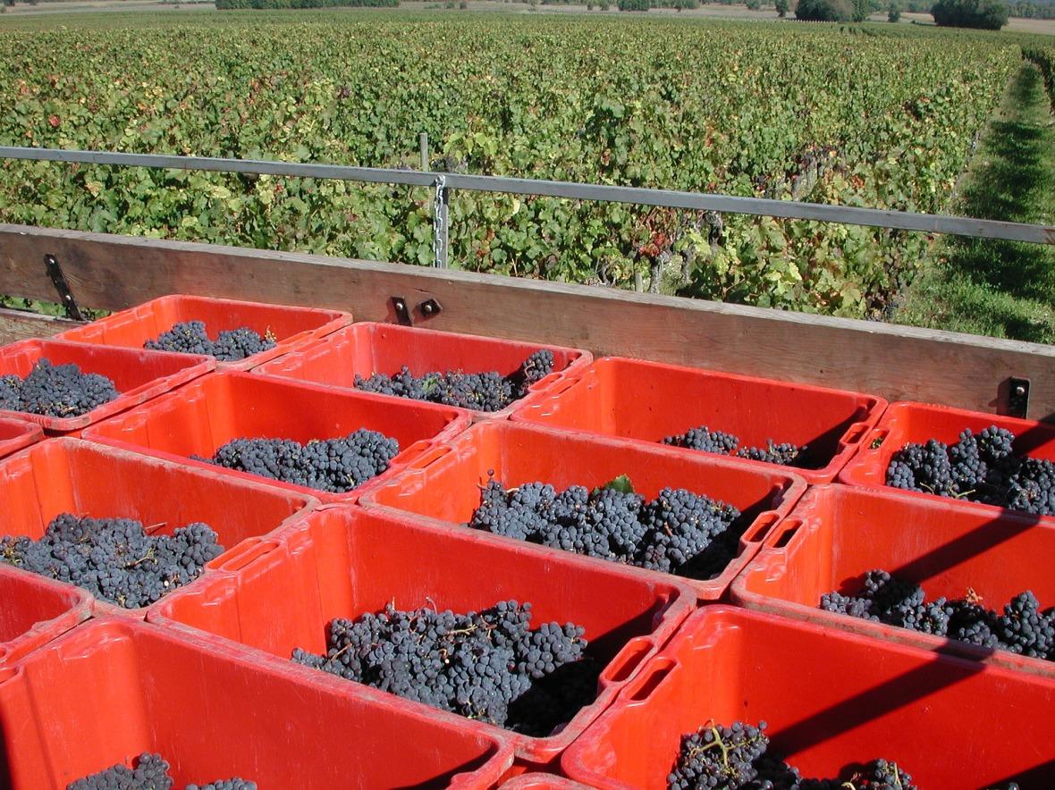 Réception de la vendange, matériel et Équipement vinicole EGRETIER