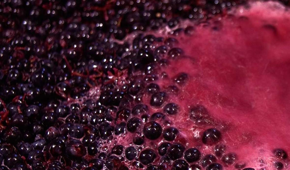Mout du vin pour EGRETIER Equipement vinicole